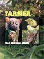 Tarsier The Littlest Alien