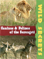 Wild Secrets Canines and Felines