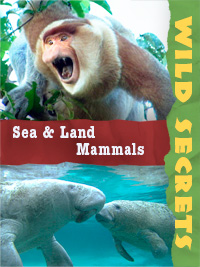 Sea and Land Mammals